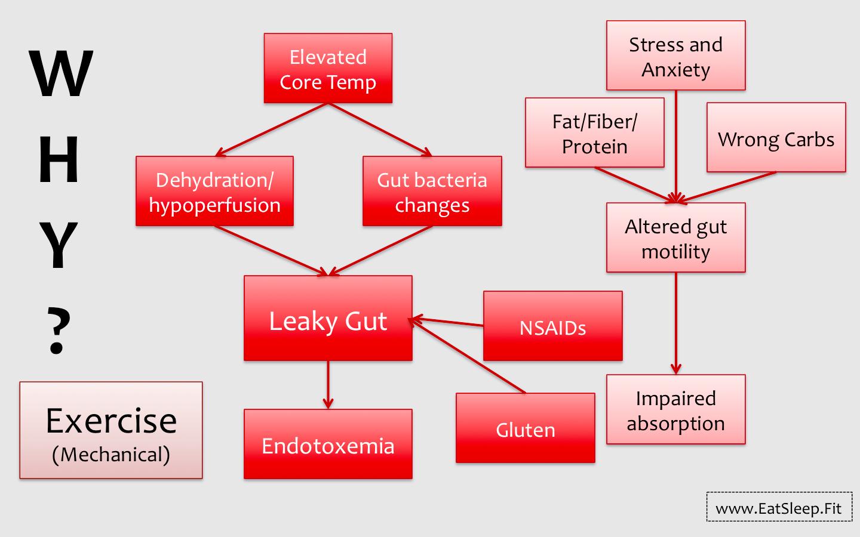 Building an Iron Gut – Part I. Causes of GI Distress